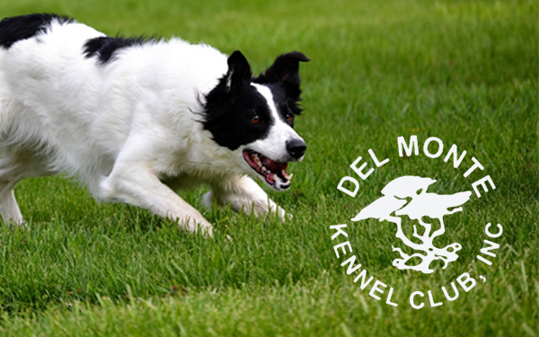 Del Monte Kennel Club Obedience Class