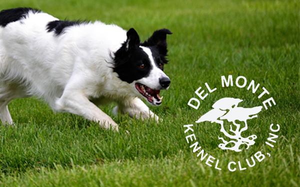 Del Monte Kennel Club Obedience Class