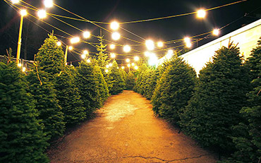 Cardinale & Wright Christmas Tree Lot