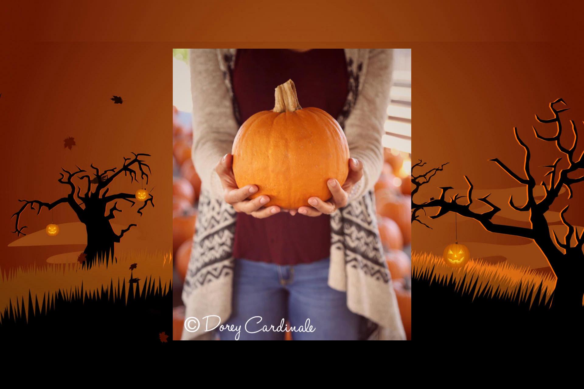 Cardinale & Wright Pumpkin Patch